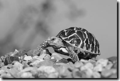 Stellung schildkröten SAVE THE
